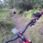 Watch: Mountain biker tumbles into bushes after spotting a black bear